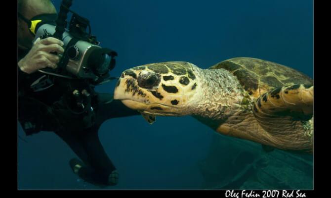 Подводный фотограф Олег Федин и морская жизнь