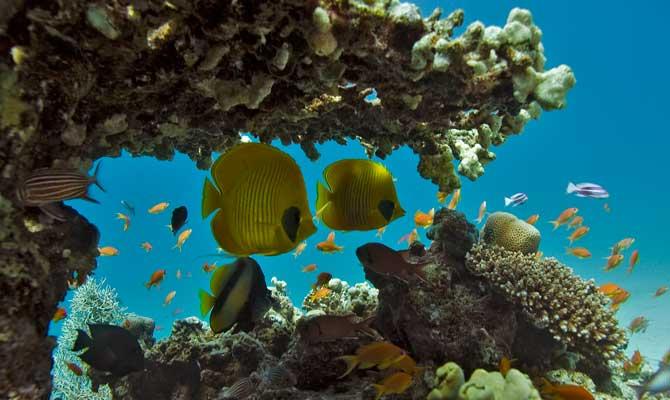 подводный мир Черного моря - Крыма