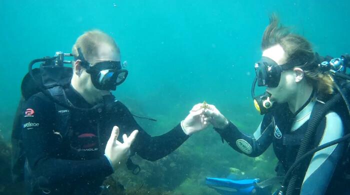 Фото. Юноша под водой дарит девушке маленький цветок