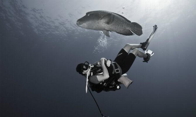 Международный сертификат дайвера научит парить вместе с рыбами ФОТО