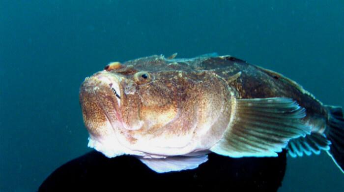 Звездочет - подводный мир Черного моря